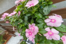 garden-reform-takakura011-サムネイル