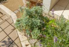 《ガーデンリフォーム工事写真集》-白石様邸-11-サムネイル